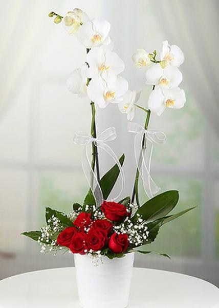Çift dal beyaz Orkide & Kırmızı güller