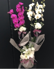 Mor ve beyaz jumbo orkide
